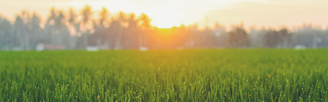 Insurance Services - Grass and sunset